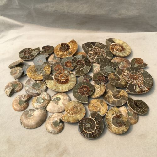 A lot of natural ammonite fossil crystal conch specimen healing 2.2LB H2006