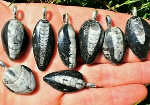 Orthoceras Fossil Pendant, Pendant Only Crystal Jewellery FLASH SALE  UK Seller✔