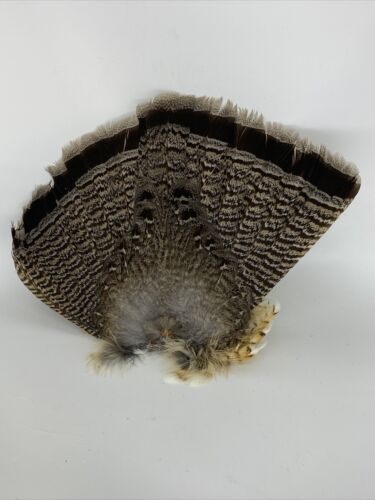 Details about  /ruffed grouse taxidermy Fly Tying Craft