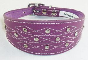 Collier de chien lévrier Whippet rembourré en cuir violet avec motif cousu Diamante