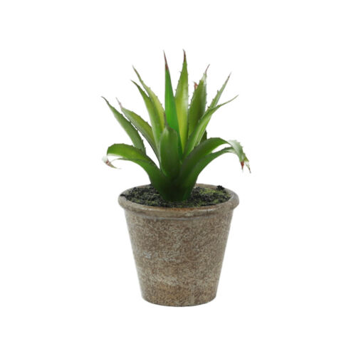 Artificial Succulents Set of 3 Small Plants in Pots Agave Cacti and Succulents
