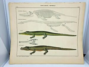 Antique-large-hand-colored-print-1843-Oken-039-s-Naturgeschichte-Plate-67-Crocodile