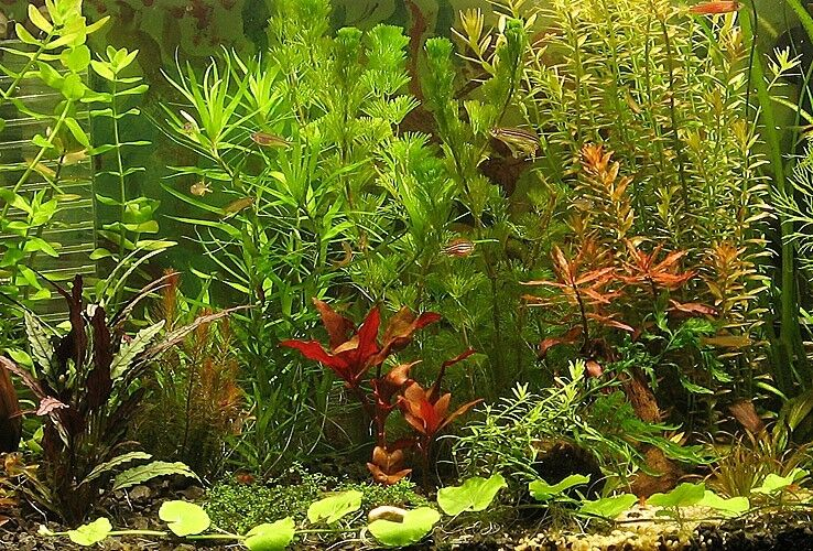 FIF160 Wasserpflanzen im Mix Aquarium Pflanzen Set GRATIS Düngekugeln