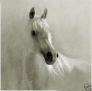 CHENPAT37-animal-100-hand-painted-white-horse-oil-painting-home-art-on-canvas