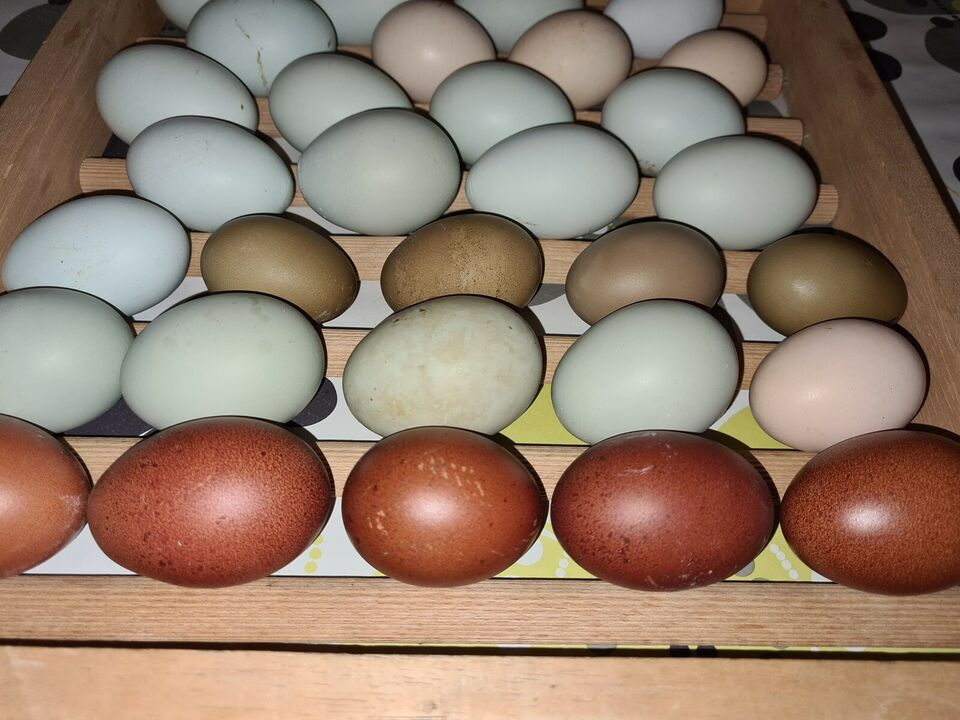 Kyllinger, 6 stk.