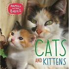 Cats & Kittens by Annabelle Lynch (Hardback, 2016)