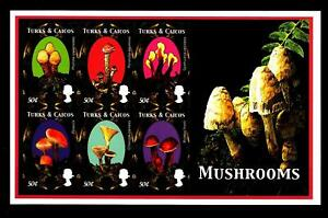 TURKS-amp-CAICOS-ISLANDS-BF-2000-Flora-Funghi