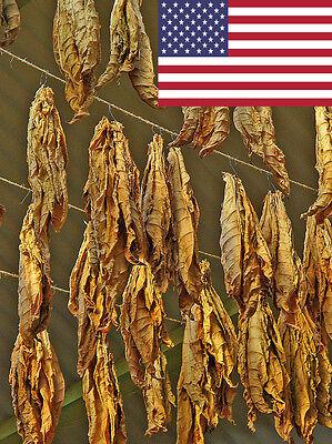 10 Tobacco SeedsVirginia Black Tobacco SeedsNicotiana tabacumTobacco