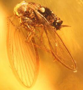 Inclusion-de-insecto-fosil-en-piedra-de-ambar-del-Baltico-FOTO-GRATIS-i1326