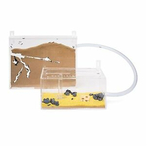 Ameisenfarm wand kit big ameisen mit k nigin free ant farm formicarium ants ebay - Ameisen in der wand ...