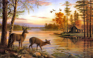 Framed-Print-Young-Stag-on-the-Shores-of-a-Lake-Picture-Cabin-Animal-Deer