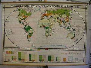 Details zu Schulwandkarte schöne alte Weltkarte PflanzenVerbreitung 124x90  vintage map~1940
