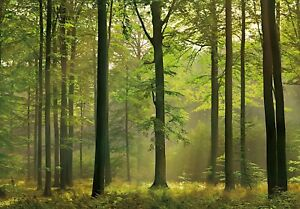 Image is loading Wall-mural-photo-wallpaper-GREEN-FOREST-SCENE-034-