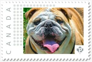 BULLDOG = DOG = Personalized Picture Postage stamp MNH Canada 2018 [p18-09-15]