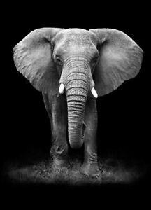 TOILE TABLEAUX    animal sauvage éléphant   50X70 CM