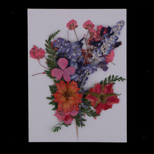 Lots Dried Flowers Real Pressed Leaves Diy Arts Crafts Embellishments Ebay