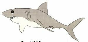 GREAT WHITE SHARK CROSS STITCH PATTERN counted