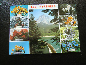 Francia-Tarjeta-Postal-Los-Pyrenees-Flores-cy62-Francesa