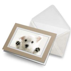 Greetings-Card-Biege-Cute-Westie-Puppy-Dog-8954