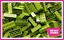 LEGO-Brique-Bundle-25-pieces-Taille-2x4-Choisir-Votre-Couleur miniature 15