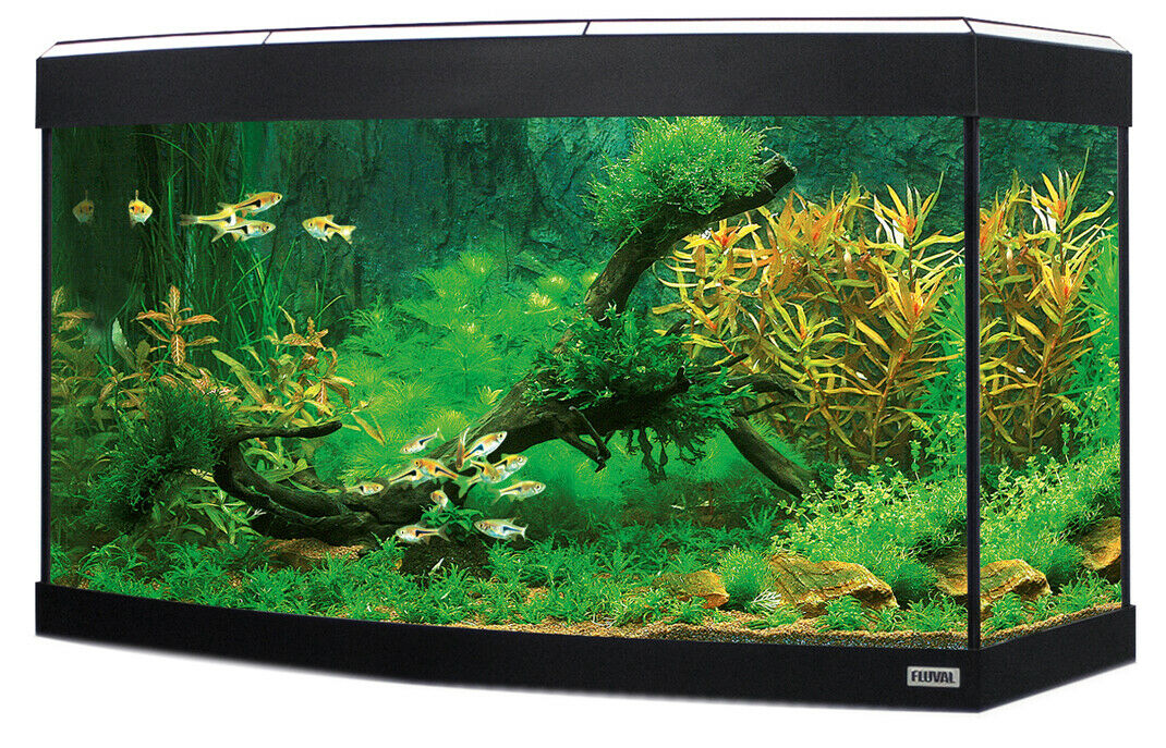 Fluval Vicenza 260L Aquarium inkl. LED Beleuchtung und Filtertechnik