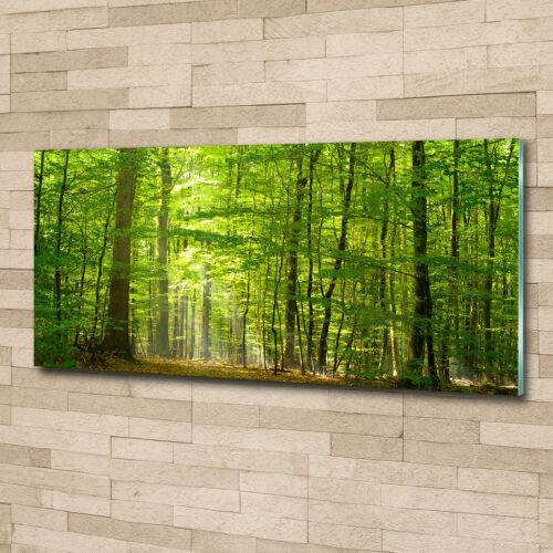 Wandbild aus Plexiglas® Druck auf Acryl 125x50 Landschaften Laubwald