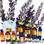TOP-SELLING-Essential-Oils-1-oz-to-64-oz-ONE-STOP-SHOP-100-Pure-amp-Natural thumbnail 21