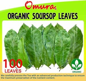 Omura-Organic-SOURSOP-GRAVIOLA-GUANABANA-Leaves-Pack-100-LEAVES