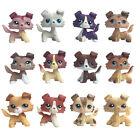 Littlest Pet Shop Collie chien LPS Rare puppy Kids collection cute toy gift