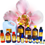 3ml-Essential-Oils-Many-Different-Oils-To-Choose-From-Buy-3-Get-1-Free thumbnail 63