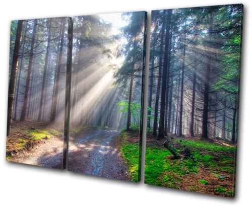 Landscapes Forest TREBLE CANVAS WALL ART Picture Print VA