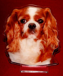 statuette-photosculptee-10x15-cm-chien-cavalier-king-charles-5-dog-hund-perro
