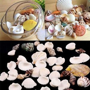1-Packet-100g-Beach-Mixed-Sea-Shells-Mix-SeaShells-Craft-Shells-Aquarium-Decor