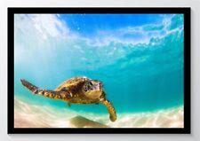 Fotografie Schildkröte Baby Kunstdruck Poster ungerahmt Bild DIN A4 A3 K0606