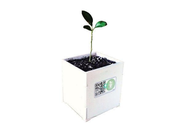 DIY smart plant pot pro kit
