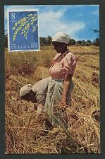 SURINAME MK 1964 FLORA GETREIDE CEREALS MAXIMUMKARTE MAXIMUM CARD MC CM d2792