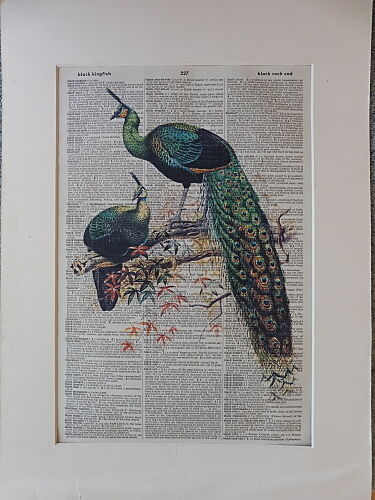 Peacock Print No.408 bird poster peacock decor peacock feathers