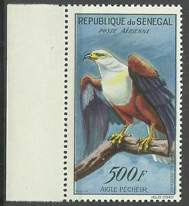 Senegal-Oiseaux-Aigle-Pygargue-Fishing-Eagle-Bird-Schreiseeadler-Vogel-1960