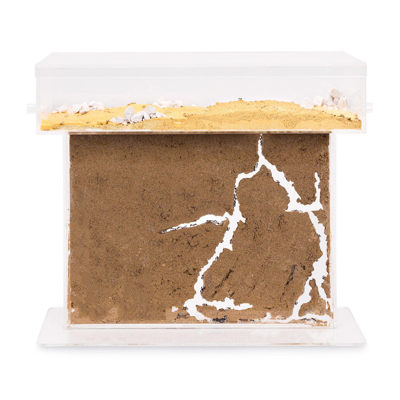 Ameisenfarm t acrílico Big (hormigas con la reina Free) (Ant Farm, formiCocheium, sistema)