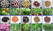 Vegetable Seeds Hybrid MINI-LOT-A for Kitchen Terrace Balcony Gardening 10 Items