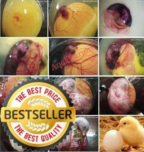 Hatching egg spray,