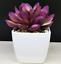 Artificial-Succulent-Plants-Small-Fake-Succulent-Bonsai-Garden-Miniature-Decor thumbnail 8