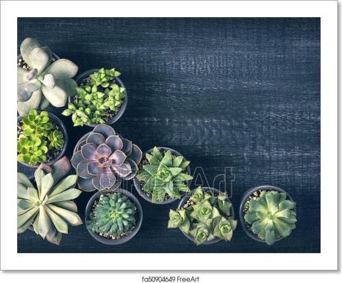 Different Succulents Art//Canvas Print Wall Art Home Decor Poster