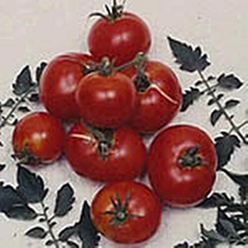 Creole Tomato Seed