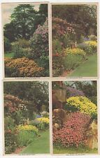 Colour Schemes with Garden Flowers, Set of 12 Popular Gardening Postcards, B608