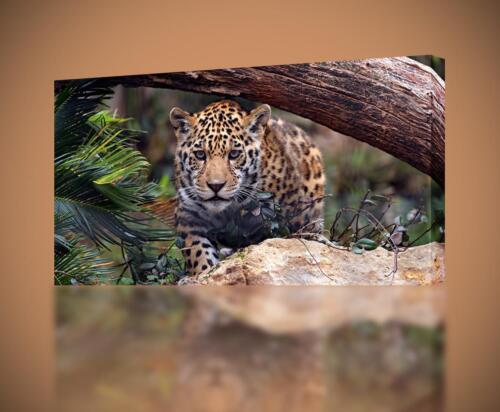 Jaguar Tiger Leopard CANVAS PRINT Wall Decor Giclee Art Poster Animals CA498