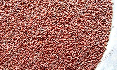 Lot Garden Cress Seed Lepidium Sativum Halim Chandrasur Habburshad