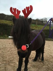 Image is loading Christmas-Horse-Dress-Up-Reindeer-Antlers-Fancy-Dress-