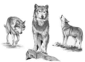 Sketching Skizzieren Malen Mit Bleistift Wolf Wolfe Grosse 30