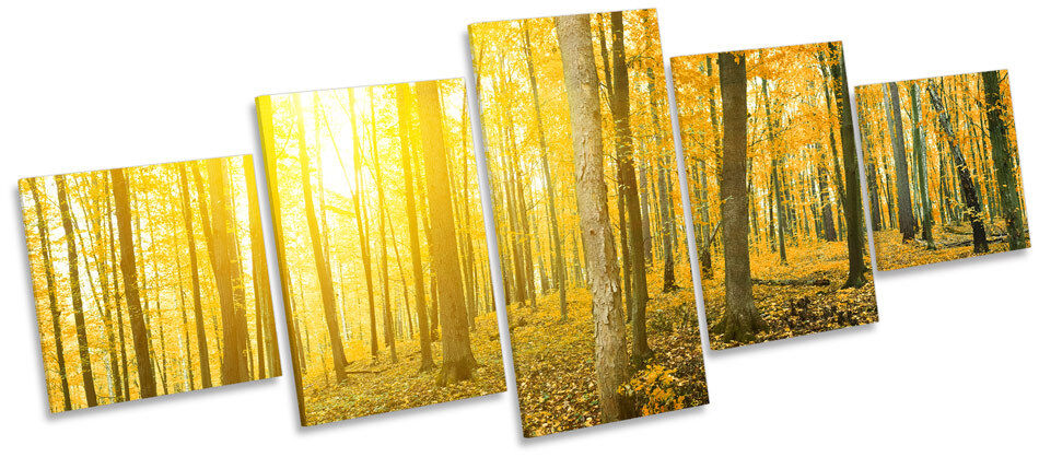 Gelb Forest Sunset Landscape MULTI CANVAS WALL ART Picture Box Frame